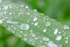 Rain drops on blade Stock Photos