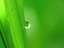 Rain drops on a blade of grass Royalty Free Stock Images