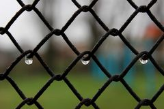 Rain drops. Blur background. Symetry. Beautiful drops of water weigh on the grid Royalty Free Stock Images