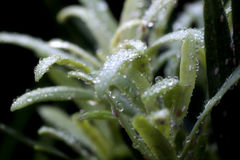 Rain drops and bugs Stock Photography