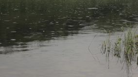 Rain drops on calm river water stock video footage