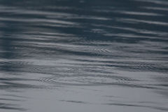 Rain drops and circles on a water surface Stock Images