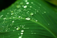 Rain drops closeup. Garden plant leaf after the rain. Morning dew on leaf. Royalty Free Stock Photo