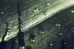 Rain drops on dark green leaf, macro shot. Tranquil spring nature flora background. Selective focus stock photography