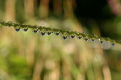Rain drops diagonal Stock Photos