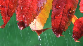 Rain drops dripping off end stock footage