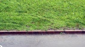Rain drops fall on the grass and asphalt stock video