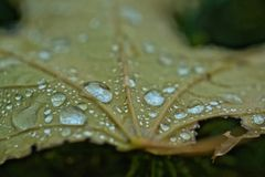 Rain drops on a fallen leaf - Macro. Photography Stock Images