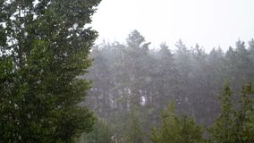 Rain Drops Falling on a backdrop of Green Forest. Slow Motion stock video