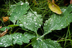 Rain  drops falling over green grass Royalty Free Stock Images