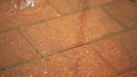 Rain drops falling on the pavement stock footage