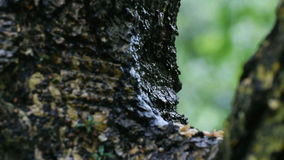 Rain drops falling from tree branch stock video footage