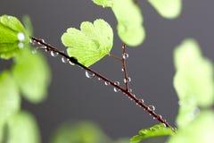 Rain Drops on Fern Stock Images