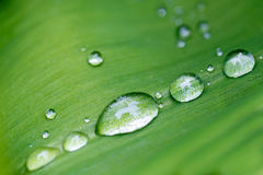 Rain drops on flower leaf close up Stock Image