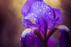 Rain drops on flower leaf Royalty Free Stock Photography