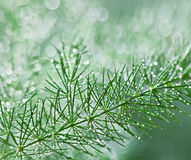 Rain drops on foliage stock photos