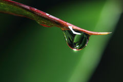 Rain drops. On fresh   grass leaves close up Stock Image