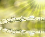 Rain drops on fresh grass in the light of the sun