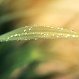 Rain drops on fresh green grass. In the rays of the setting sun.Green background with grass royalty free stock images