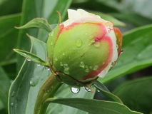 After rain. The drops of freshness give the joy of life stock photos
