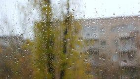 Rain drops on the glass stock video