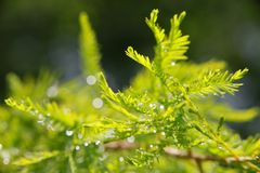 Rain Drops on Leaves Stock Images