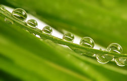 Rain drops on grass Stock Images