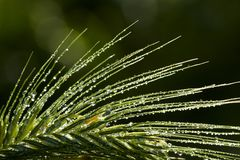 Rain drops on grass Stock Image