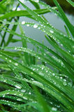Rain drops on the grass. Rain drops on the green grass Royalty Free Stock Images