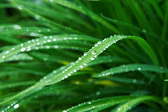 Rain drops on grass Royalty Free Stock Photos
