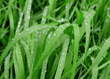 Rain drops on the grass Royalty Free Stock Photography