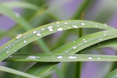 Rain drops on the grass. Close up Stock Photos