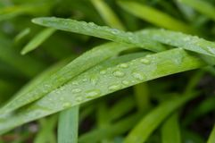 Rain drops on grass stock photos