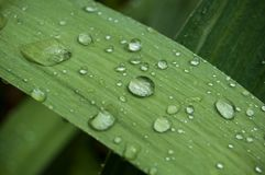 Rain drops on grass royalty free stock photo