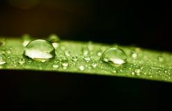 Rain drops on grass leaf Royalty Free Stock Image