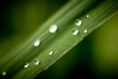 Rain drops on grass leaf Stock Photos