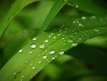 Macro with rain drops on a grass leaf in spingtime. Rain drops on a grass leaf in spingtime Royalty Free Stock Images