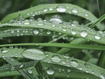 Rain drops on a grass and leaves Stock Photography