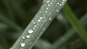 Rain drops in the grass stock video footage