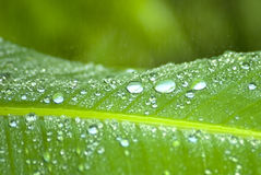 Rain drops on a green leaf Royalty Free Stock Photos