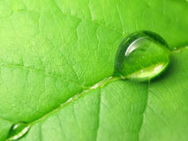 Rain drops on a green leaf Stock Images
