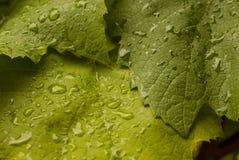 Rain drops on green leaf. Green leaf with rain drops Stock Photo