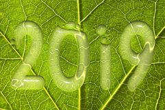 2019, rain drops on a green leaf background, new year environment concept. 2019, rain drops on a green leaf background, 2019 new year environment concept royalty free stock image