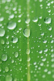 The rain drops on a green leaf Stock Photography