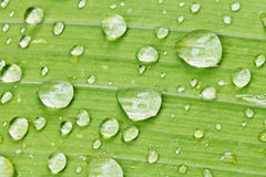 Rain drops on green leaf of iris close up Royalty Free Stock Photos