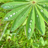Rain drops on green leaf Stock Images