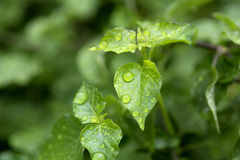 Rain drops on green leaf Stock Image