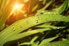 Rain drops Stock Photos