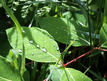 Rain drops on green leave on a summer day Stock Photo