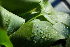 Water drops on leaves, purity concept stock images